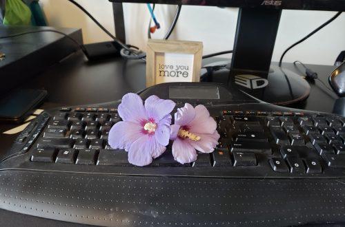 flowers on keyboard